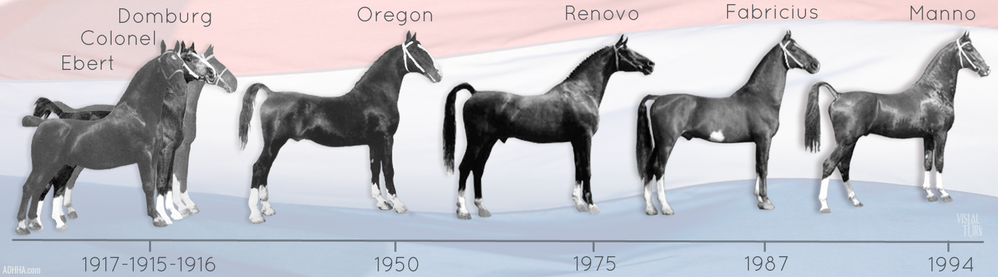 DHH history timeline stallions