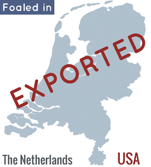 DHH born in NL exported to USA