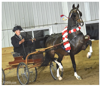 ADHHA Grand National Champion Anna