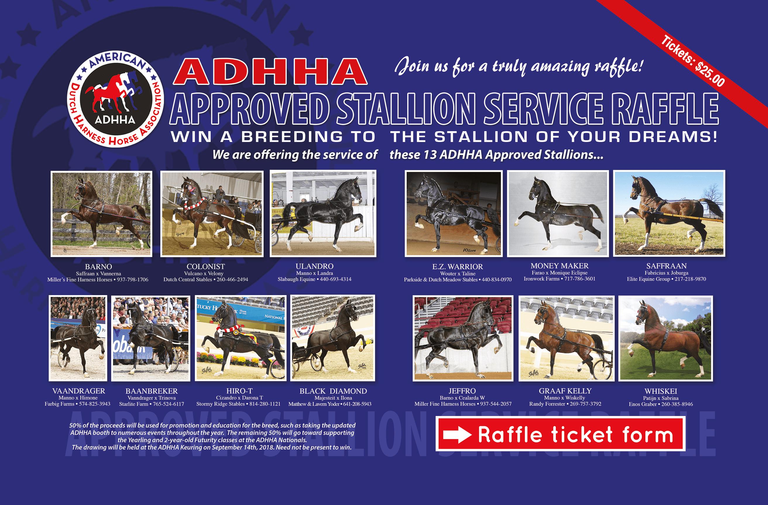 stallions-homepage