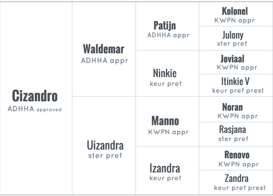 ADHHA pedigree Cizandro